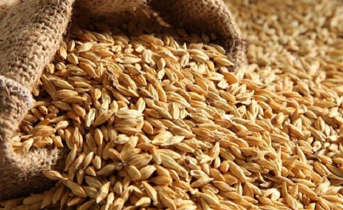 Ցամաքային ճանապարհով ցորենի ներկրման արգելքը կրկին ակտուալ է դառնում. դա կհանգեցնի հացամթերքների և մսի թանկացման. «Ժամանակ»
