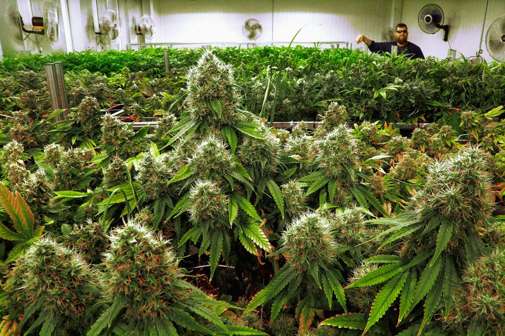Смотреть все фото марихуаны материалы из конопли