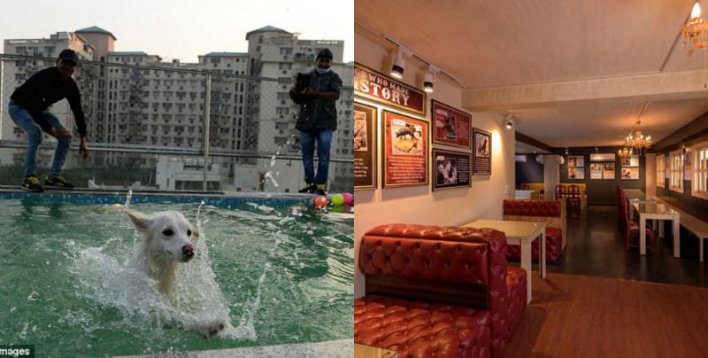 Հնդկաստանում շների համար նախատեսված էլիտար հյուրանոց է բացվել (լուսանկարներ)