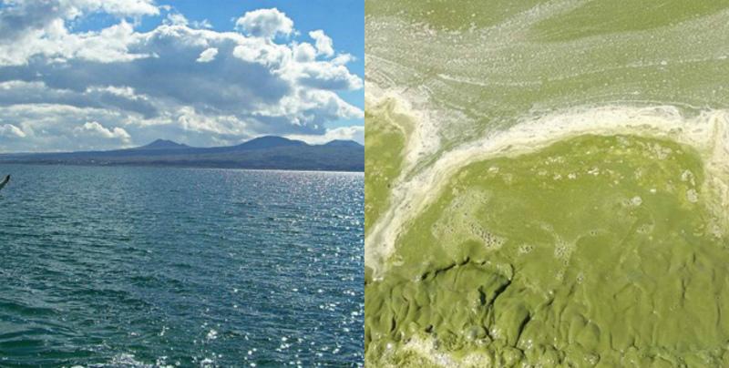 Ուղիղ եթերով հայտարարեք Սևանա լճի մաքրման ֆլեշմոբ. «SOS Սևան» նախաձեռնությունը բաց նամակ է հղել ՀՀ վարչապետին