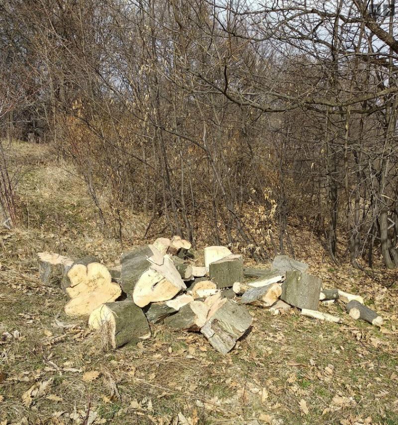 Ապօրինի հատվել է 131 հատ ծառ. մեղադրանք է առաջադրվել Լոռու մարզի 3 բնակչի