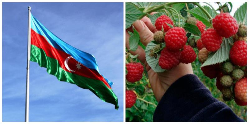 Ադրբեջանցիներին արգելել են անտառից մրգեր, հատապտուղներ եւ դեղաբույսեր հավաքել
