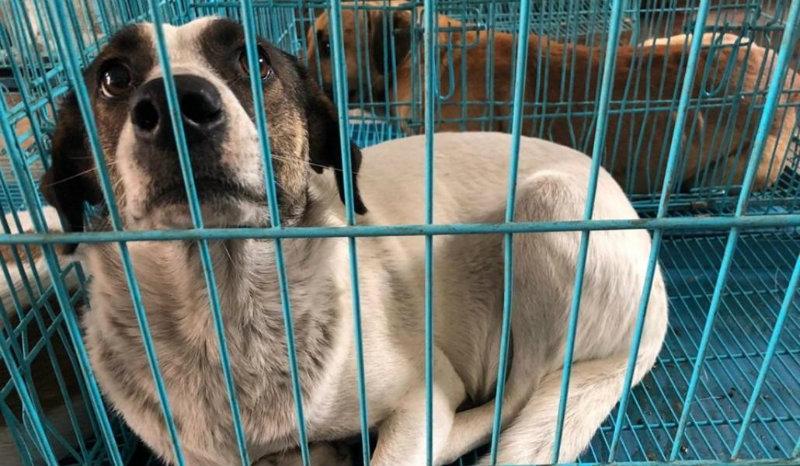 Կենդանաբանական այգու աշխատակիցների կողմից բռնված շների մոտ արտառոց ոչինչ չի նկատվել. ԹԿՎԿ