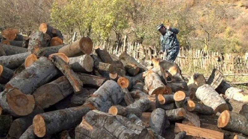 Լոռու մարզում ապօրինի անտառահատումների հանցավոր դեպքերով մի քանի անգամ ավելի շատ գործեր են դատարան ուղարկվել և անձինք դատապարտվել