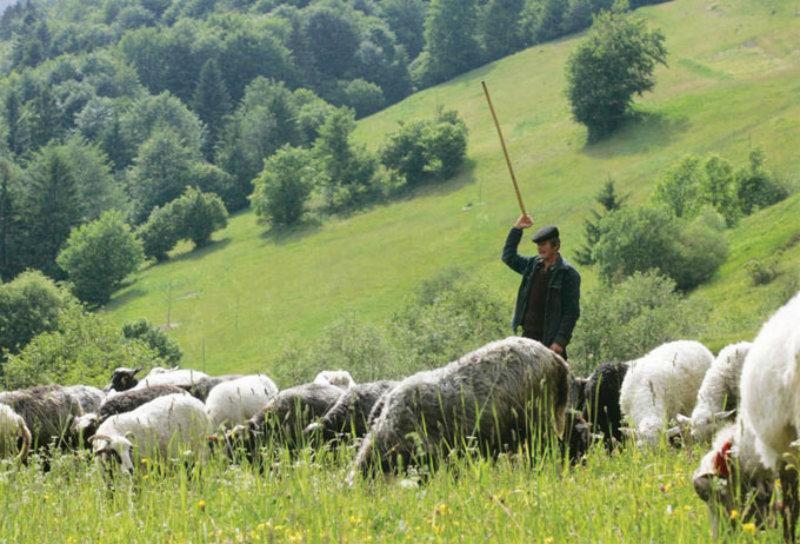 Սյունիքում 2 հովվի սպանության դեպքի առթիվ հարուցվել է քրեական գործ