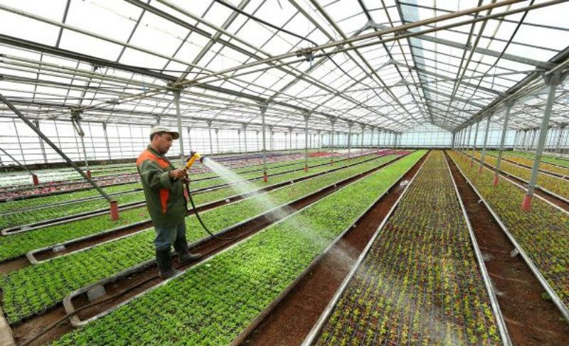 Կոտայքի մարզում ինտենսիվ այգեգործության, ջերմոցային տնտեսության ոլորտում աճ է արձանագրվել