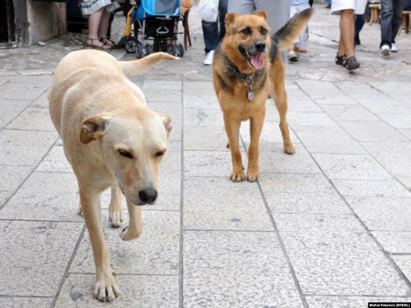 20 թափառող շուն է քնեցվել