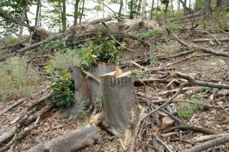 «Իջևան» անտառտնտեսության տարածքում 28-ամյա քաղաքացին բենզասղոցով ծառ է կտրել, ճյուղն ընկել է գլխին և ստացած վնասվածքից մահացել է