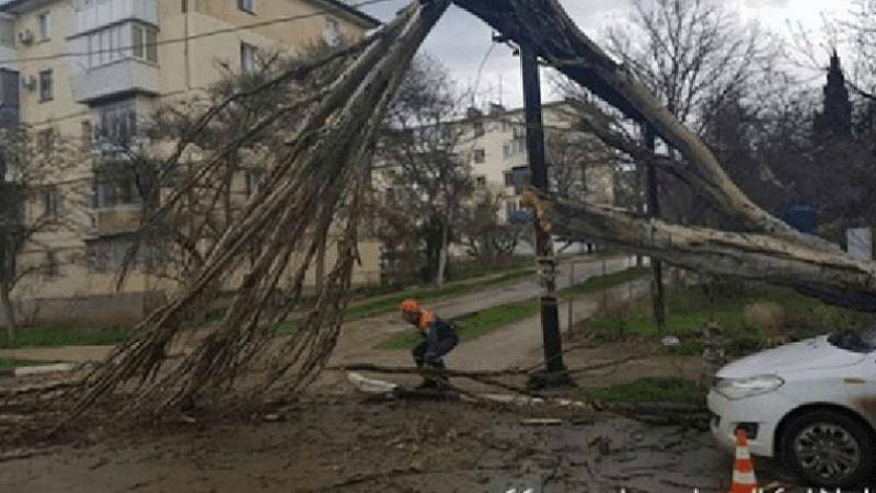Ուժեղ քամու պատճառով ծառն ընկել է էլեկտրական լարերի վրա