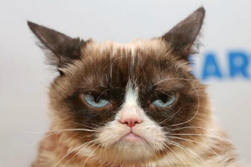 ԱՄՆ-ում սատկել է 100 մլն դոլար կարողություն հավաքած հանրահայտ «դժգոհ» կատուն