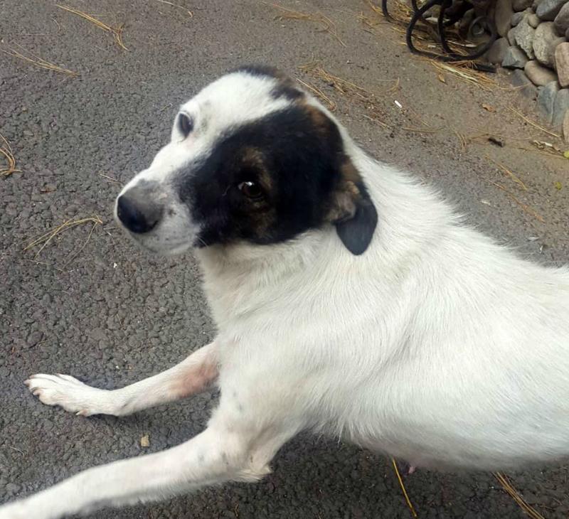 Ականատեսն ահազանգում է, որ Դիլիջանի ազգային պարկի տնօրենը կրակել է այնտեղ բնակվող շանը