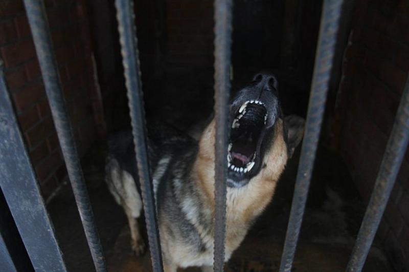 ՌԴ-ում շունը հոշոտել է մեկ տարեկան երեխային