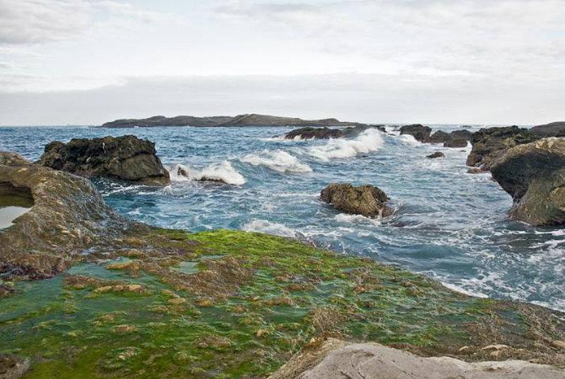 ԱՆ-ը խորհուրդ է տալիս չլողալ Սևանի այն լողափերում, որտեղ կան ջրիմուռներ
