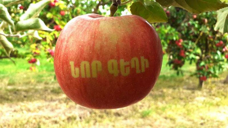 Այսօր կանցկացվի Խնձորի առաջին փառատոնը