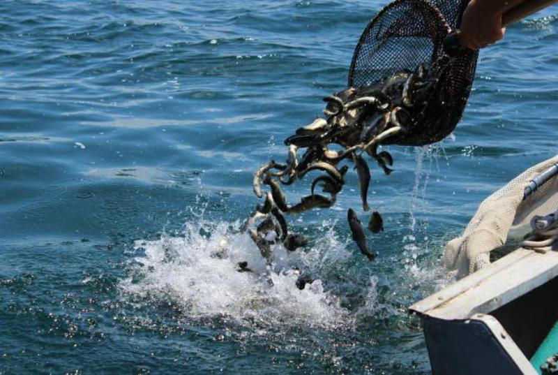 Գեղարքունիքի դատախազությունը ապօրինի ձկնորսության վերաբերյալ քրեական գործն ուղարկել է մարզի առաջին ատյանի ընդհանուր իրավասության դատարան