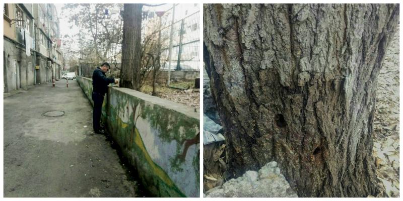 Անհայտ անձը ծառերի բնամասում անցքեր է բացում և դրանք լցնում անհայտ ծագման հեղուկով. ահազանգում է Երևանի քաղաքապետարանը