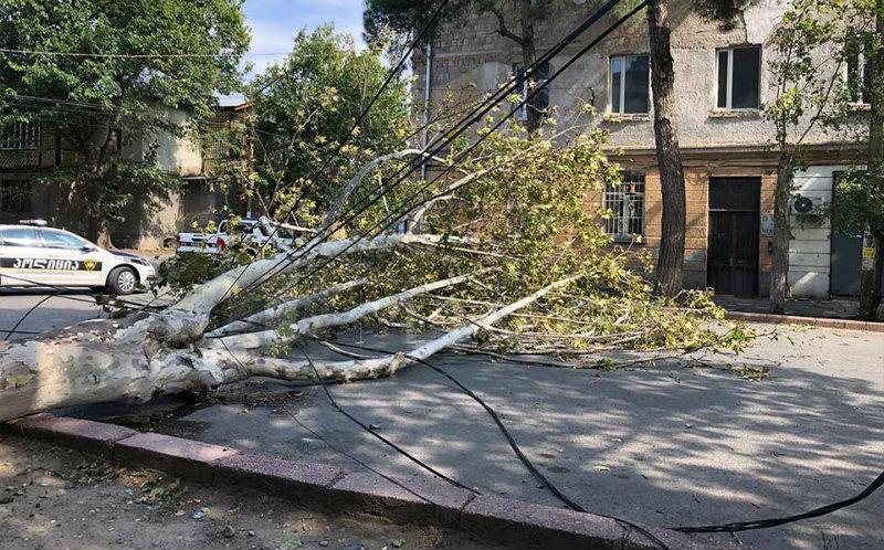 Ուժեղ քամուց արմատախիլ եղած ծառը Թբիլիսիում ընկել է 2 մարդու վրա