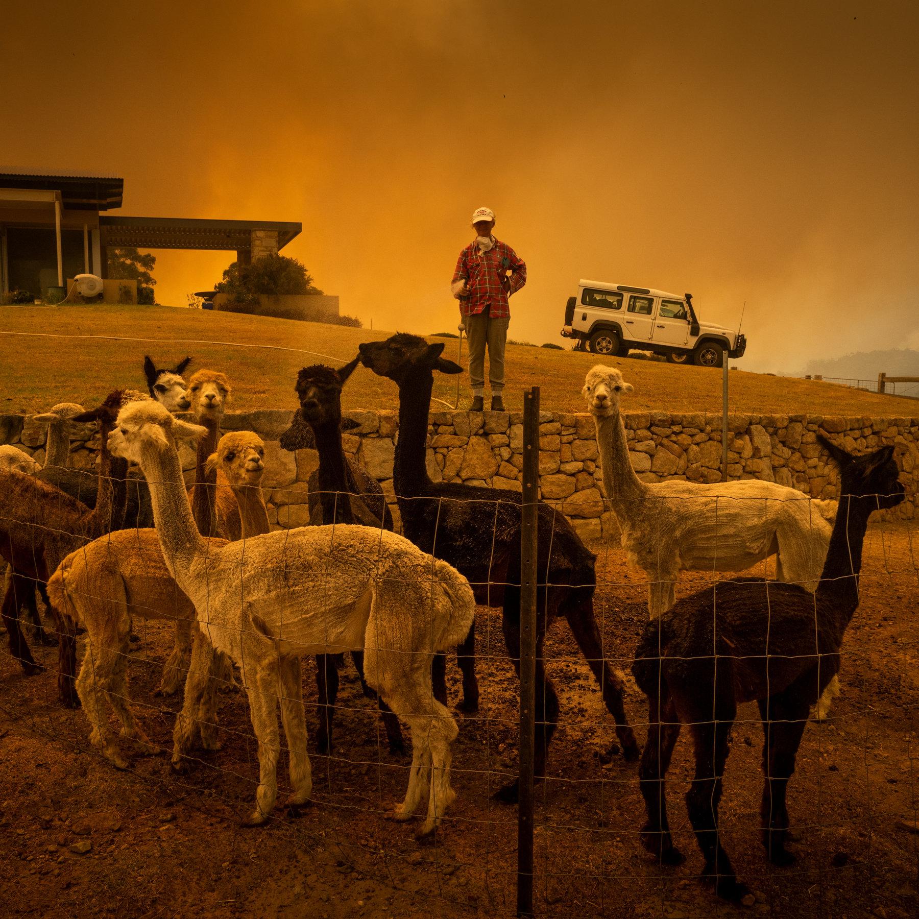 Ավստրալիայի հրդեհի պատճառով ոչնչացել է մոտ 6 միլիոն հեկտար անտառային տարածք, 500 միլիոն կենդանիներ
