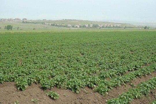 Շիրակի մարզի 4 գյուղական համայնքներ տուգանվել են կես միլիոն դրամով