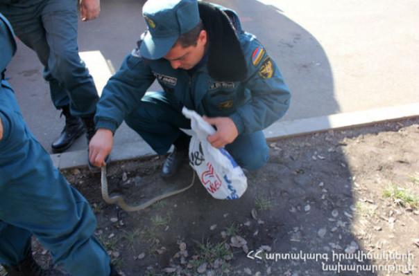 Փրկարարները հայտնաբերել և անվտանգ տարածք են տեղափոխել օձերին