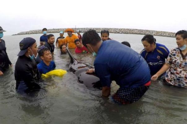 Թաիլանդի ափերի մոտ սատկած կետի փորում 80 պլաստիկե տոպրակ են հայտնաբերել