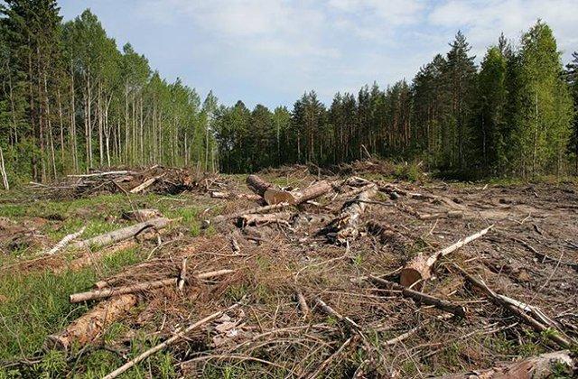 Ապօրինի ծառահատման դեպք Ստեփանավանի անտառտնտեսությունում