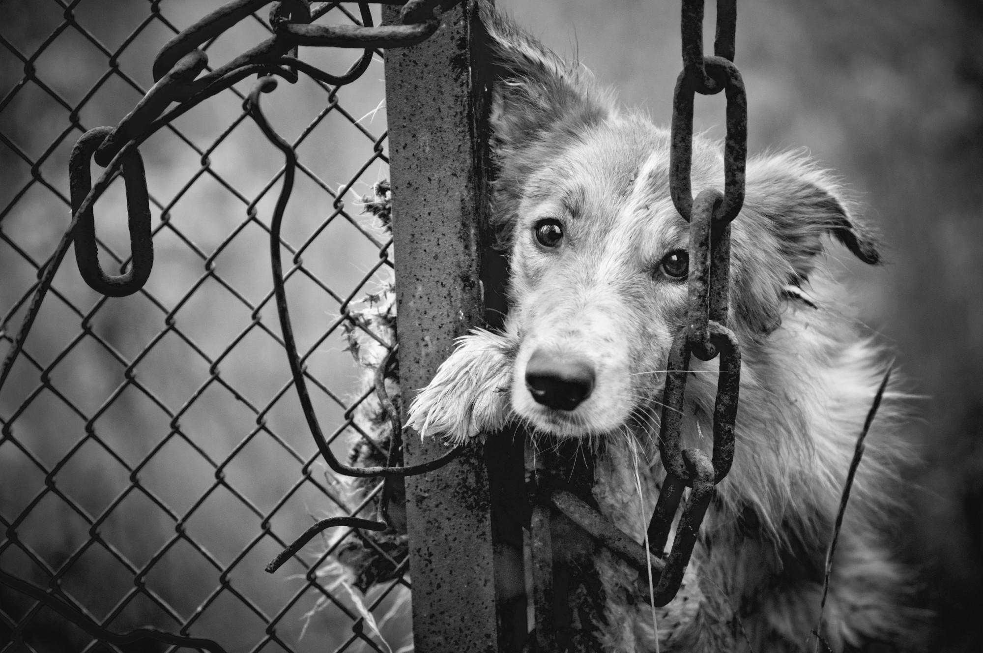 Կենդանիների խոշտանգման համար նաև ազատազրկում կսահմանվի. ԲՀԿ առաջարկն ընդունվել է
