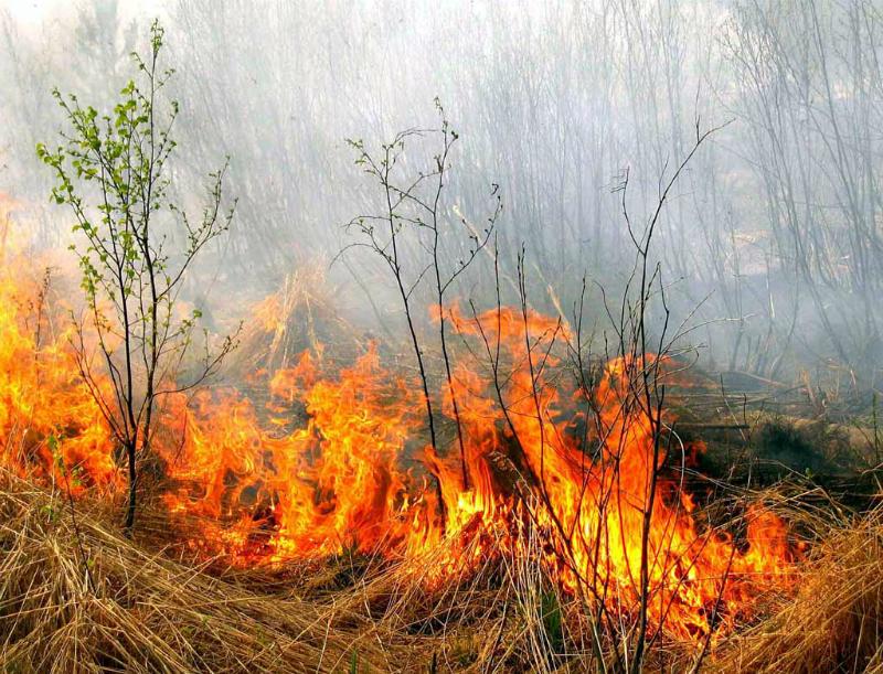 «Դիլիջանի ազգային պարկ»-ի  տարածքում այրվել են փայտե թափոններ