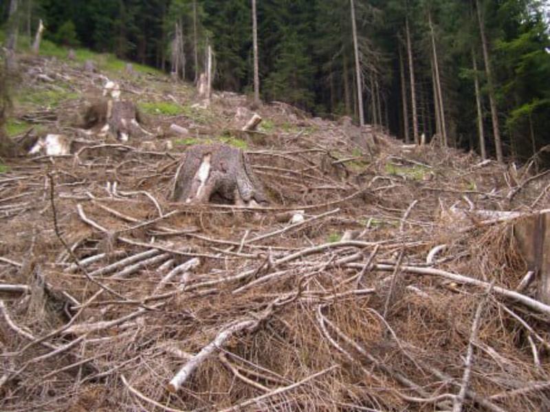 Անտառահատման դեմ պայքարի խստացումը անտառներով հարուստ մարզերում լուրջ խնդրի առջև է կանգնեցրել բնակիչներին. «Փաստ»
