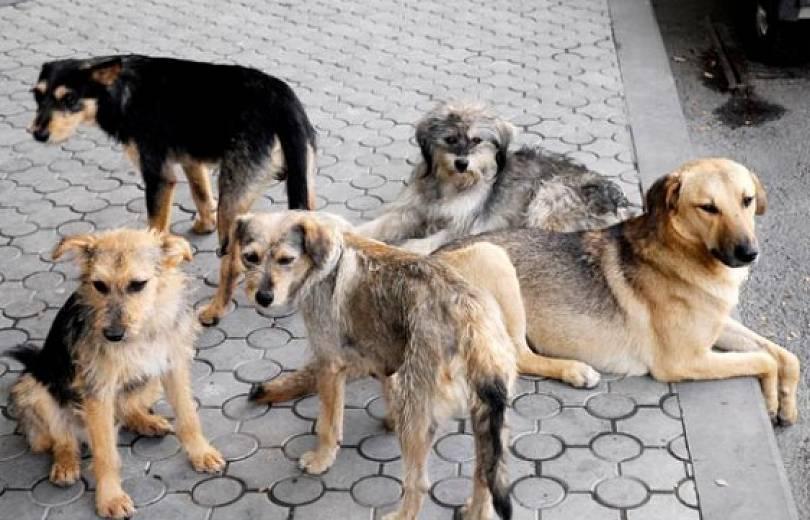 Խորհրդարանական մեծամասնությունը դեմ է թափառող շներին ոչնչացնելու արգելքի օրինագծին