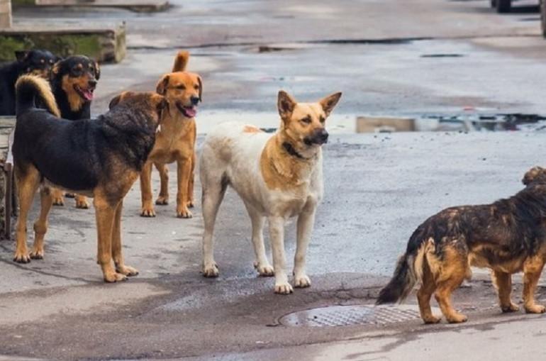 Վահագնի թաղամասում շները հարձակվում են բնակիչների վրա