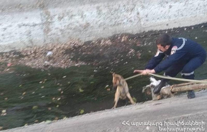 Փրկարարները շանը դուրս են բերել ջրանցքից և տեղափոխել անվտանգ տարածք