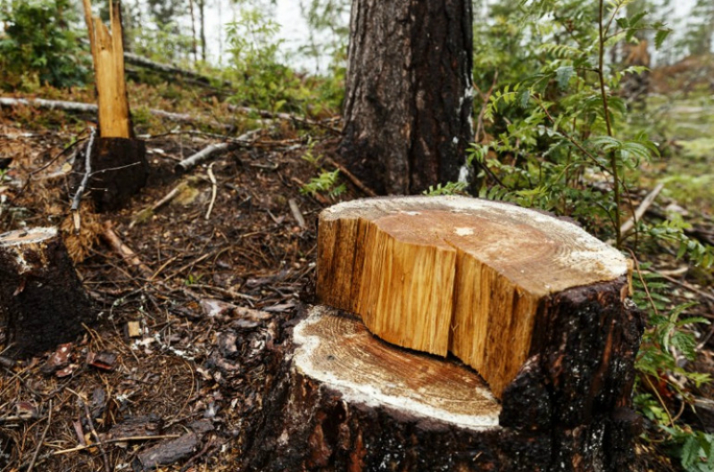 Առերևույթ կոռուպցիոն չարաշահումներ «Հայանտառ» և «Դիլիջան ազգային պարկ» ՊՈԱԿ-ների անտառապահների կողմից