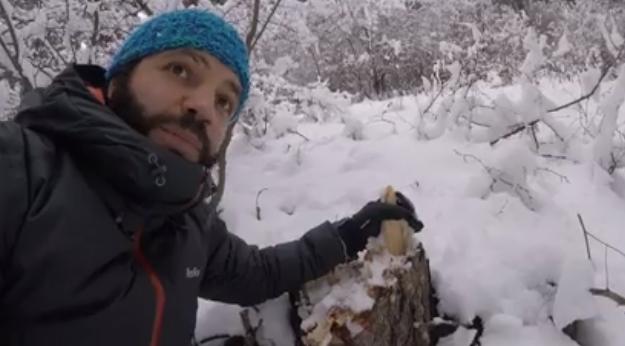 «Դիլիջան» ազգային պարկում եղևնիներ են հատվել (տեսանյութ)