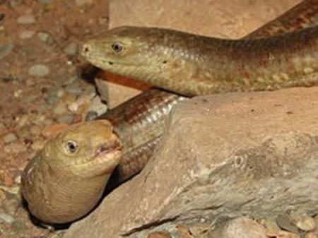 Կոյուղագծերի խողովակի մեջ հայտնաբերվել են օձեր