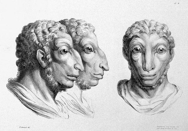 Ինչպիսի տեսք կունենային մարդիկ, եթե ռաջացած լինեյին այլ կենդանիներից (լուսանկարներ)