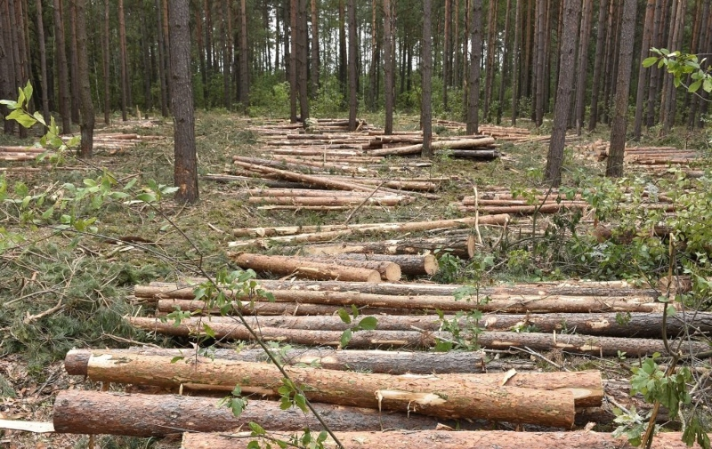 Հայաստանում ապօրինի հատվում է տարեկան մինչև 1 մլն ծառ