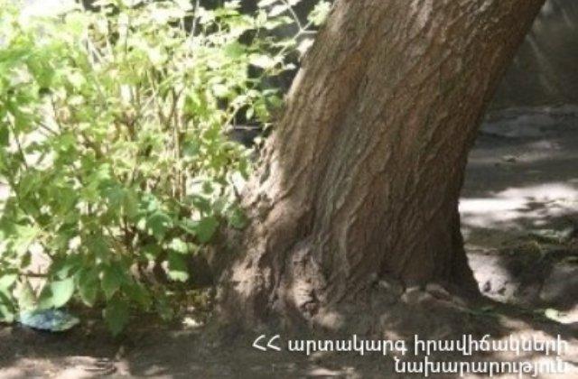 Շինարարների փողոցում ծառը թեքվել է, առկա է ընկնելու վտանգը