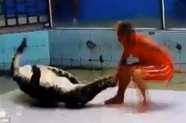 Թաիլանդում 3 մետրանոց կոկորդիլոսը շոուի ժամանակ հարձակվել է վարժեցնողի վրա (տեսանյութ)