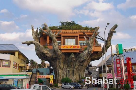 Յուրօրինակ ռեստորան` ծառի վրա