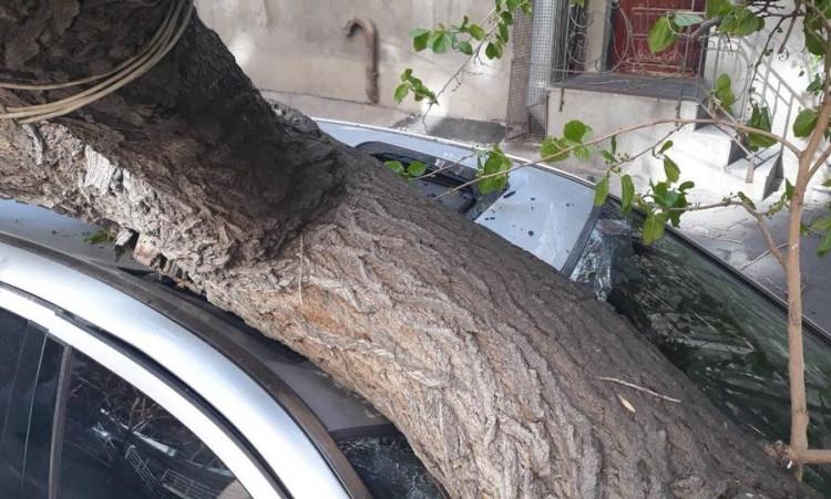 Երեւանում ծառը պոկվել եւ ընկել է Toyota Camry ավտոմեքենայի վրա