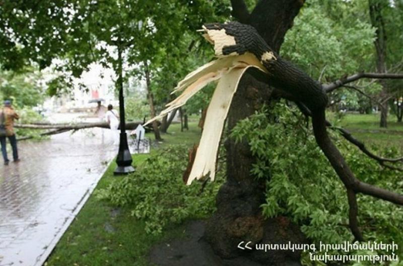 Երևանի Մոսկովյան փողոցում ծառը կոտրվել և ընկել է 5-ամյա և 34-ամյա 2 քաղաքացու վրա. կան տուժածներ