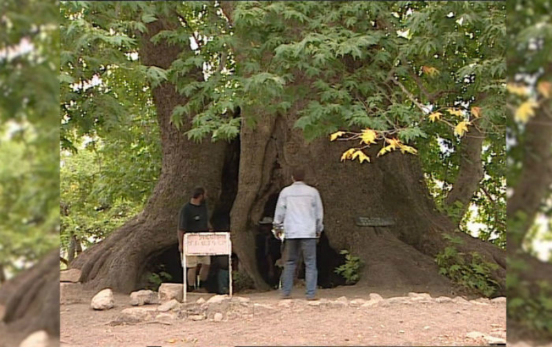 Ինչու էր Նիկոլայ II–ը թոշակ նշանակել Արցախում գտնվող ծառի համար. armeniasputnik.am