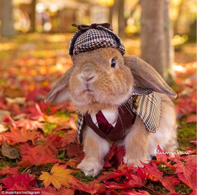 Ծանոթացեք աշխարհի ամենանորաձև ճագարի հետ (ֆոտոշարք)