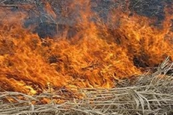 Շիրակում և Արարատում անասնակեր է այրվել