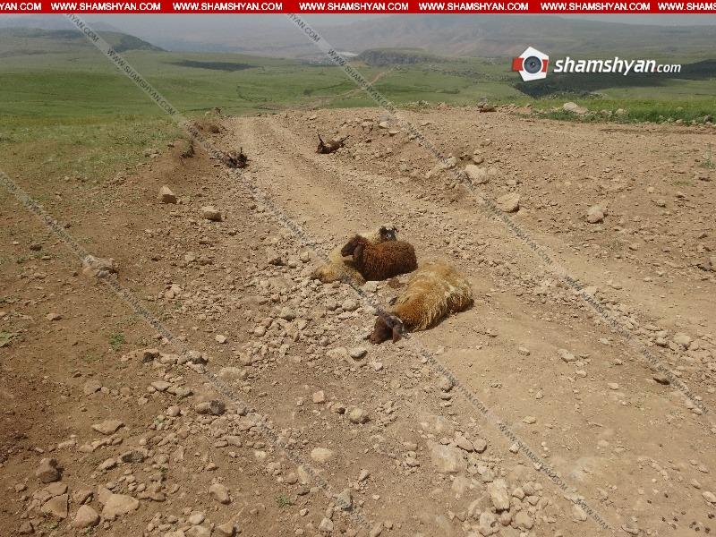 Սպառնացել է կացնահարել կթվորուհուն․ Մանվել Գրիգորյանի ոչխարները գողանալու գործով կա ձերբակալված․ նոր մանրամասներ