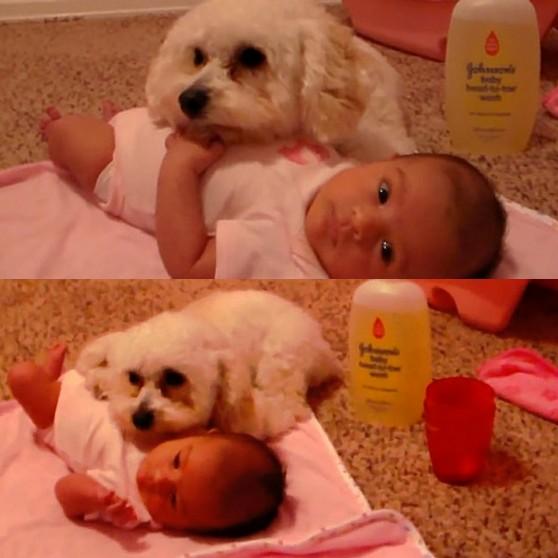 Շունը պաշտպանում է նորածնին փոշեկուլից (տեսանյութ)