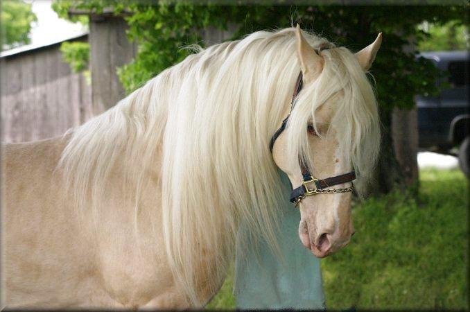 Աշխարհի ամենագեղեցիկ ձիերը, որոնցից անհնար է աչք կտրել (լուսանկարներ)
