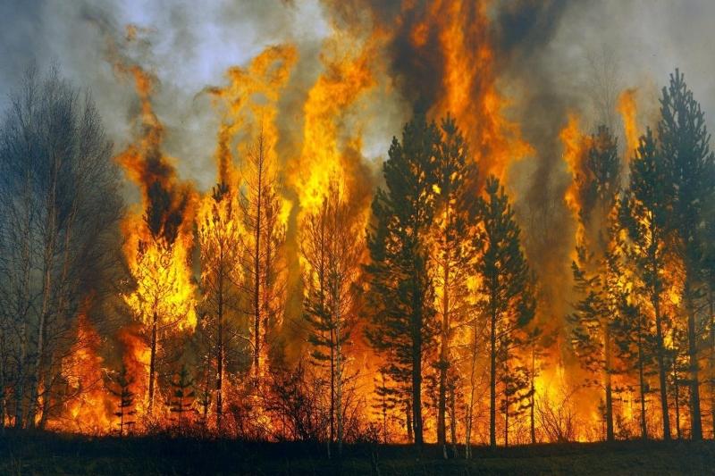 Ռուսաստանում անտառային հրդեհների մակերեսը մեկ օրում ավելացել Է 23 հազար հեկտարով