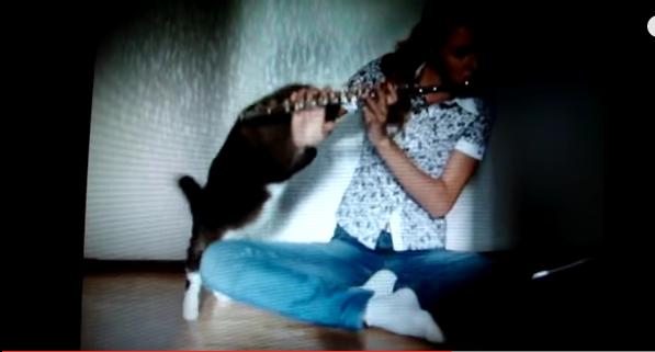 Երաժշտությունից հոգնած կատուն հարձակվում է տիրոջ վրա (տեսանյութ)